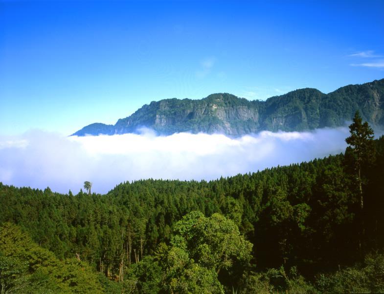 塔山森林雲海