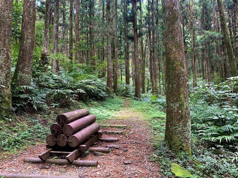東眼山森態小旅行~健康定位.森林饗宴