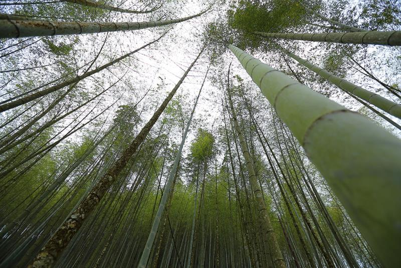 森呼吸人文生態探索之旅
