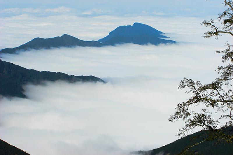 森情雪霸-觀霧森林SPA生態之旅