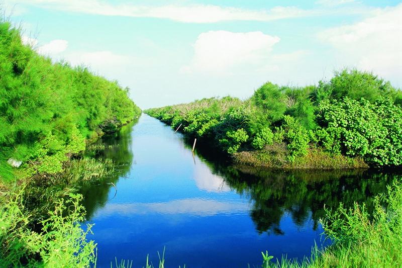 溪口.鰲鼓濕地生態之旅