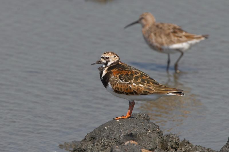大肚溪口野生動物保護區