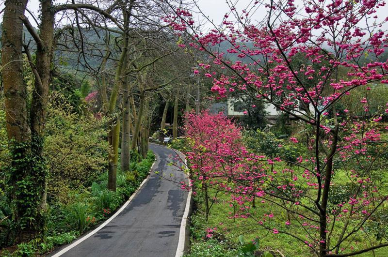 Paseo de los cerezos