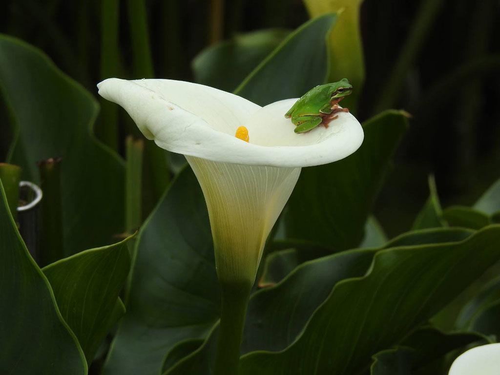 海芋田的生態之美  來源:臺北市政府