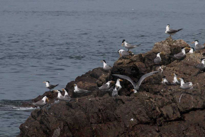 貼近大海,近距離觀賞各種燕鷗生態  年度:2019  來源:連江縣交通旅遊局