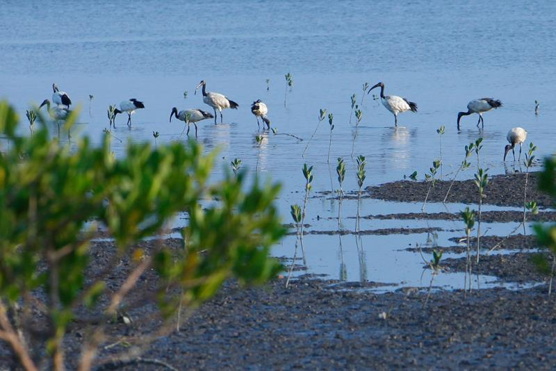 生態豐富的關渡是許多愛鳥人士賞鳥的好地方