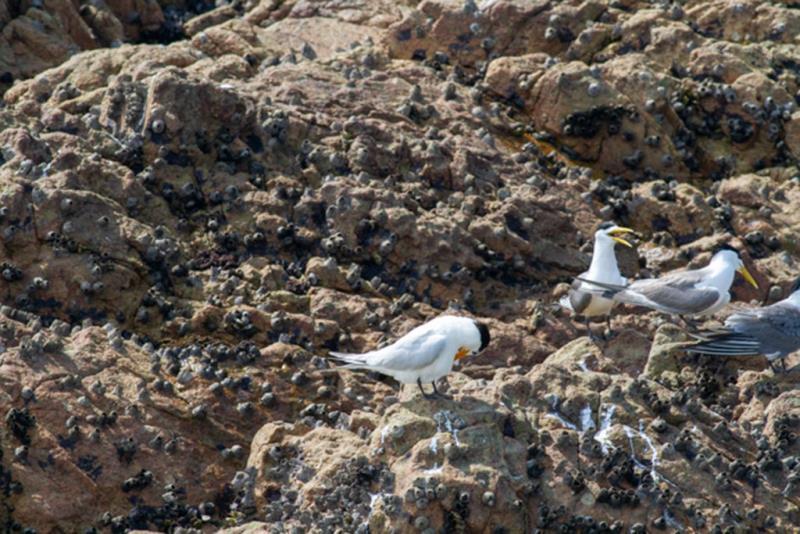 神話之鳥整理羽毛  年度:2018  來源:馬祖國家風景區管理處