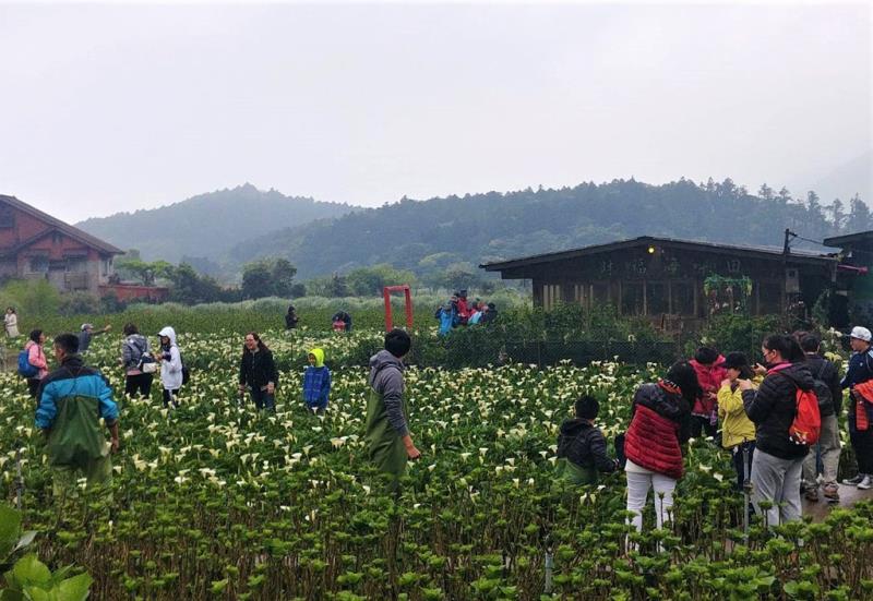 遊客攜家帶眷體驗採海芋樂趣  來源:臺北市政府