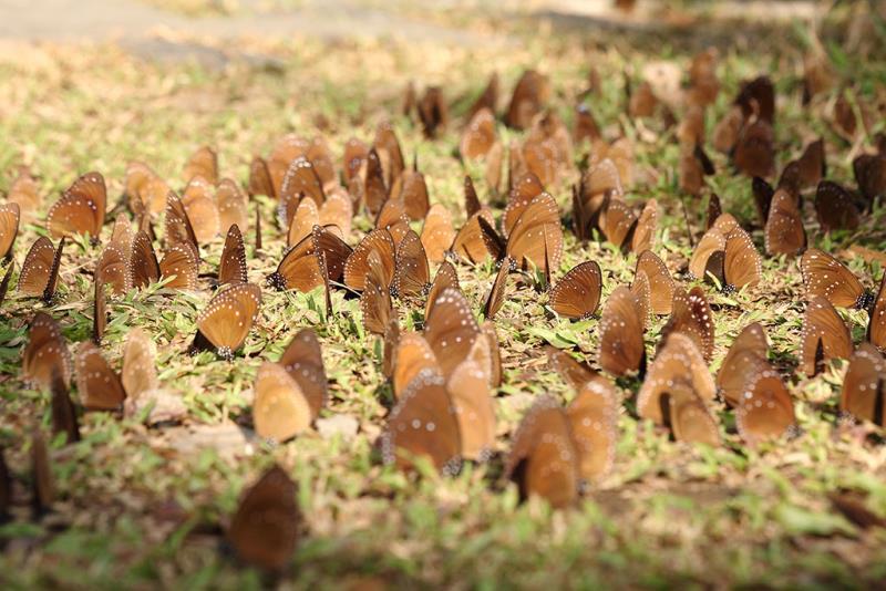 蝴蝶地毯  年度:2018-19  來源:茂林國家風景區管理處