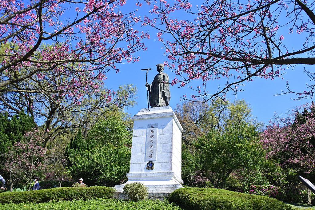 陽明公園王陽明銅像區山櫻花盛開  年度:2018  來源:花卉試驗中心
