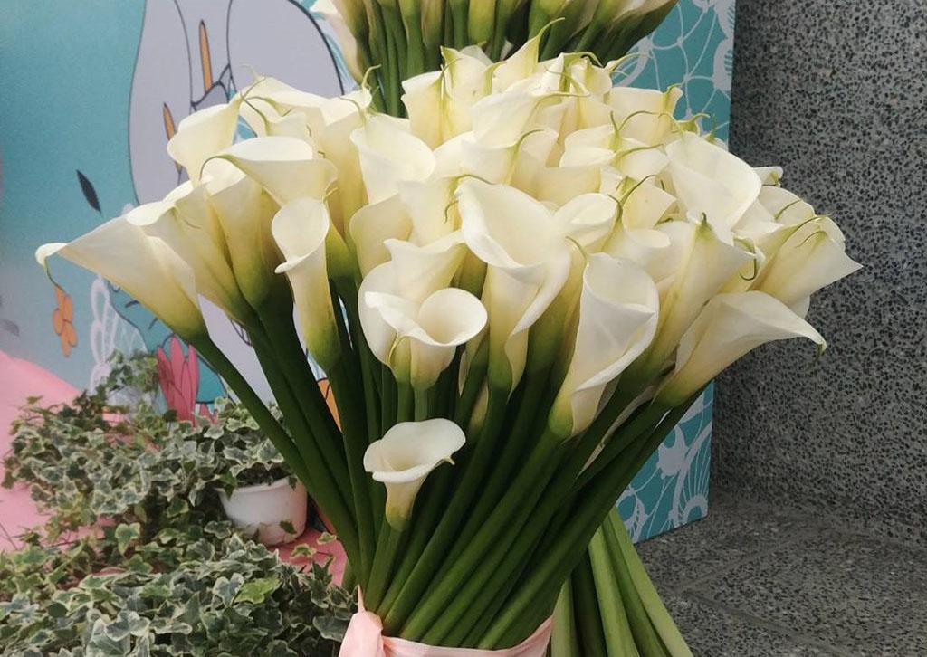 白色海芋展現浪漫魅力  來源:臺北市政府