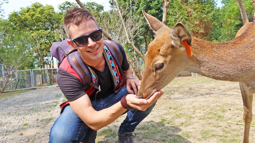 活動賽事搭配逐鹿部落遊程體驗,可近距離體驗與梅花鹿互動,品嘗部落美食,觀賞鄒族部落舞蹈表演。  來源:阿里山國家風景區管理處