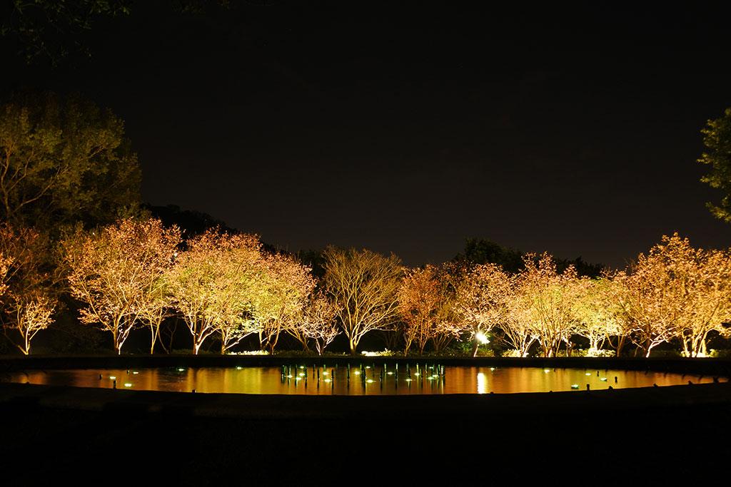 陽明公園噴水池夜景  年度:2019  來源:花卉試驗中心