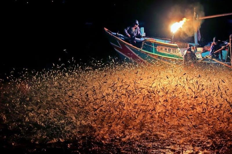 北海岸金山磺火-《蹦火仔》 世界僅存古老漁法