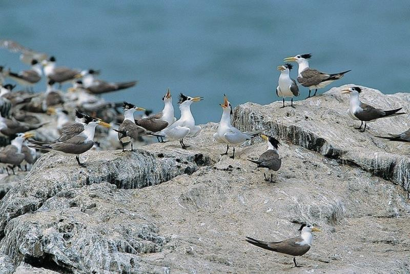 2020生態賞鷗暨海上看馬祖 尋找傳說中的神話之鳥