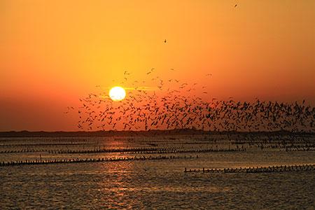 第九屆亞洲賞鳥博覽會在嘉義 臺灣鳥類郵票搶先亮相