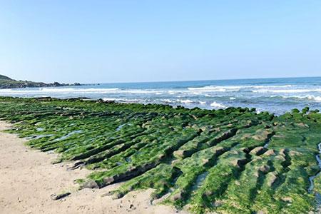 季節限定美景-北海岸抹茶色地毯 老梅綠石槽綠了
