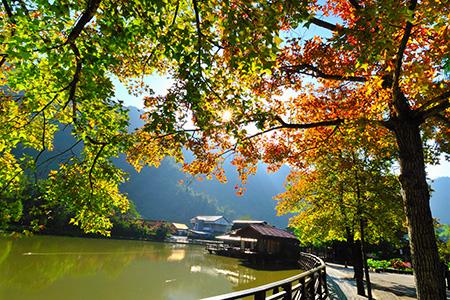 衝一波!搭台灣好行 暢遊秋冬最HOT景點