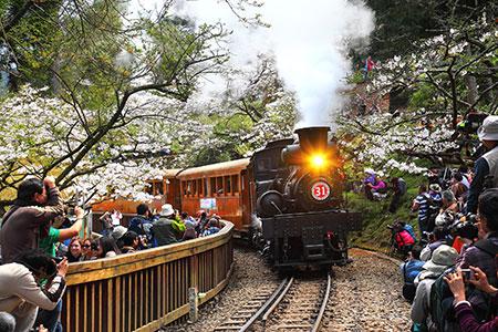 線上遊台灣~阿里山國家森林遊樂區 花季來臨~超美櫻花現正盛開中